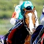 Groom Strike Interrupts Racing In South Africa