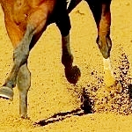 Thoroughbred Idea Foundation: Horsemen Deserve Fair Compensation