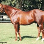 Lucky Pulpit, Sire of California Chrome, Dead At 16