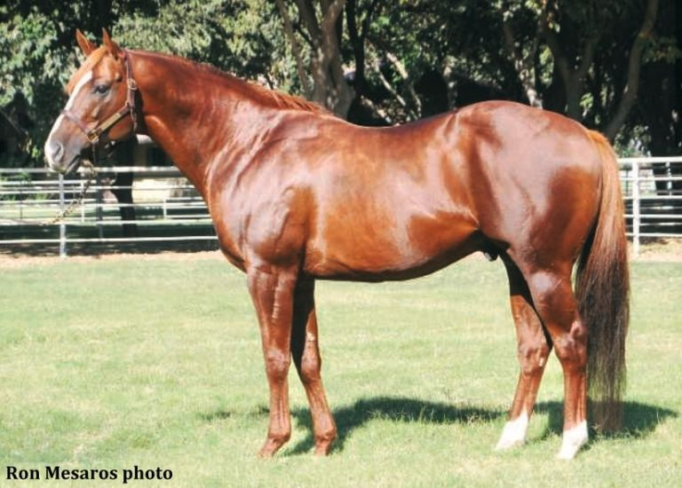 Lucky Pulpit Sire Of California Chrome Dead At 16