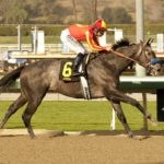 Graded Stakes Winner Midnight Hawk To Stand In Jamaica