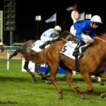 Group 2 Winner Safety Check To Stud In Argentina