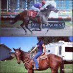 Cosequin Presents Aftercare Spotlight: Transforming Thoroughbreds In The Sunshine State
