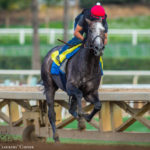 Arrogate 'Just Galloping Along' In First Work Since Pegasus