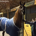 'Sudden, Catastrophic Injury': Charismatic's Death Caused By Pelvic Fracture