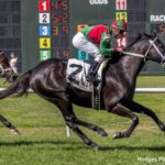 8-Year-Old Hogy Sets Track Record In Colonel Power Overnight Stakes