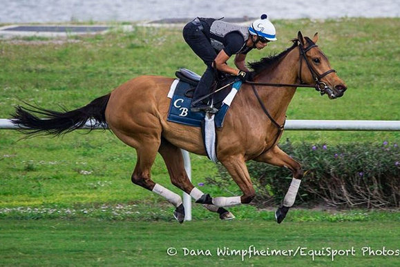 Lady Eli Miss Temple City Grace Palm Meadows Turf In