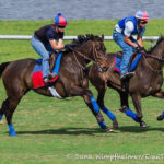 Lady Eli, Miss Temple City Grace Palm Meadows Turf In First Works Of 2017