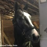 Tapwrit 'Improving All The Time,' Could Point To Tampa Bay Derby