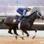 Uncontested Completes Final Drill For Southwest Stakes