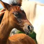 It's Not Just You: Antibiotic Resistance A Challenge For Equine Veterinarians