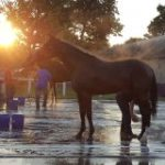 What A Pain: Hoof Abscesses A Common Frustration For Horses In All Life Stages