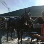 Indiana Derby: Wild Shot Stretches Back Out, Brockton George May Be Ready To Step Up