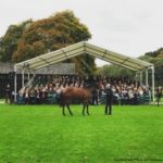 An American In Newmarket: In The Shadow Of A Castle, Highclere Yearlings Prepare To Shine At Sale