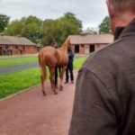 An American In Newmarket: Galloping Yearlings And The Veterinary Perspective