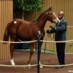 Tapit Mare Brings $750,000; Figures At November Sale Still Down Slightly Despite Solid Day 4