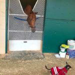 Barn Buddies: Frank Started At The Bottom, Now He's Jetsetting