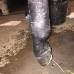 Pennsylvania: Trainer Suspended 45 Days After 'Failure To Provide Care' To Horse With Broken Leg