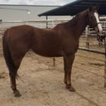 Texas Case Reveals Tricky 'Business' Of Horse Slaughter Rescue