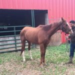Lost And Found Presented By Horseware: Waters Now Smooth For Rough C's Ahead