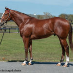 Medaglia d'Oro Filly, Into Mischief Colt Bring $1.2 Million To Top Fasig-Tipton Gulfstream Sale