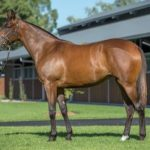 Arrowfield Offerings Dominate Day One of Inglis Australian Easter Yearling Sale