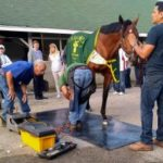 NYRA Bets Presents Derby Countdown: Names, Numbers And Feet?