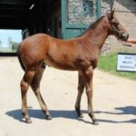 Jockey Club Issues First Digital Foal Registration Certificate