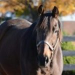 Racehorse Retirees Tour Of The Cat, Catlaunch Pass Away At Old Friends