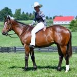 Cosequin Presents Aftercare Spotlight: Giving Young Thoroughbreds Value For The Long Term