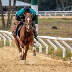 Coenzyme Q10 in Racehorse Nutrition