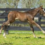 First Crop Snapshot: Lord Nelson's April Foals 'Everything I Expected'