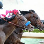 The Derby 20 Presented By Adequan: Hoping For Clarity