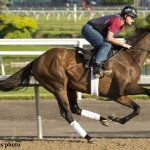 Favorite Avie's Flatter In Outside 14 Post For 160th Running Of Queen's Plate