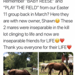 'The Lucky Ones': Thoroughbred Welfare Group Offers Look Inside The Aftermath Of I Care I Help