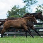 First Crop Snapshot: Summer Rolls On For Lord Nelson's First Foals