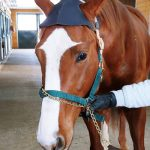 The Lameness Locator Helps 'See' What Veterinarians Can't