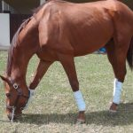 After Quarantine Debacle, Supreme Soul Is Back Home In Jamaica
