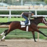 Kentucky Derby Winner Authentic Among Preakness Contenders Breezing At Churchill Downs