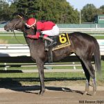 This Time It Counts: Pirate's Punch Proves Best In Salvator Mile