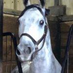 Oklahoma Legend Highland Ice, 27, Passes: 'The Iceman' Won 15 Of 16 At Remington Park