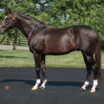 Tiznow's Pensioning And The State Of The Godolphin Arabian/Man O' War Sire Line