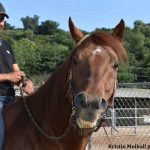 Kirkpatrick & Co Presents In Their Care: Humberto Gomez More Than Just An Exercise Rider To The Stars