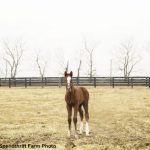 Toast To Vino Rosso: Colt Out Of Coup De Coeur Is 'Everything You Look For In A Foal'