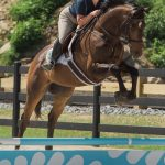 Love At First Ride: Retired OTTB Tizno Makes The Leap Into A New Life