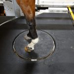 Please Remain Standing: New CT Scanner Changing The Landscape Of Equine Diagnostics