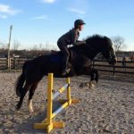 The Blueberry Bulletin Presented By Equine Equipment: Lessons From A Draft Cross To An OTTB