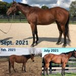 The Blueberry Bulletin Presented By Equine Equipment: With Makeover Two Weeks Away, This OTTB Is Already A Winner
