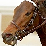 Old Friends: 'Elder Statesman,' Grade 1 Winner Dinard Dies At 32