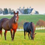 KY: Approximately $10.8 Million In Breeders' Incentive Funds To Be Awarded